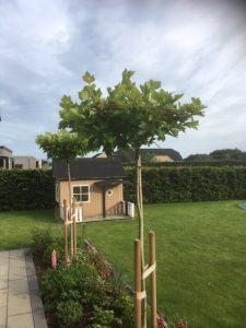 Parasol træ - Lavet med Rionet